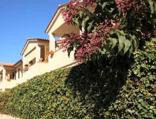 Complesso residenziale a Magliano in Toscana